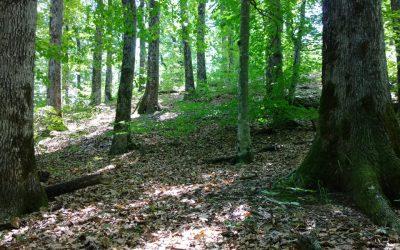 Signatura del contracte de Bosc Terapèutic i del conveni amb l'Ajuntament de Sant Hilari Sacalm