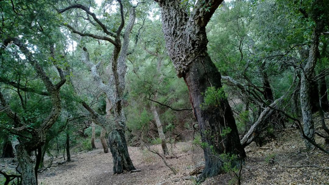 Selvans Boscos 2