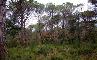Fundació Caixa d'Enginyers patrocinarà el bosc terapèutic de Can Fornaca, a Caldes de Malavella