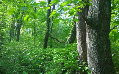 Conveni de col·laboració amb l'Ajuntament d'Olot per a l'impuls dels boscos terapèutics al municipi