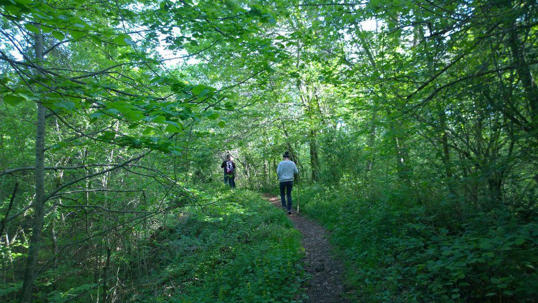Participem a la 2a jornada sobre boscos madurs, a Olot