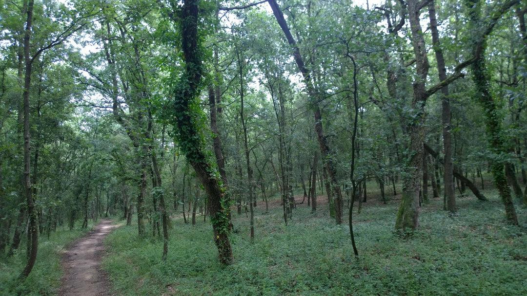 Un jardí dels sentits amb plantes aromàtiques com a complement al bosc terapèutic de Palau-sacosta