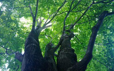 ESTEVE s'uneix al projecte d'impuls de 7 boscos terapèutics pilot a la demarcació de Girona