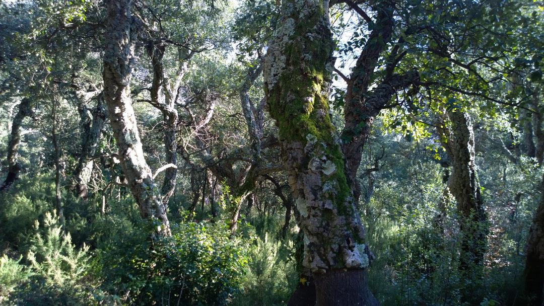 Selvans Serra d'Heures 7