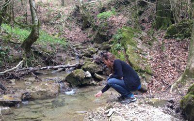Els serveis ecosistèmics dels boscos més madurs i l'ODS 6 (AIGUA I SANEJAMENT)