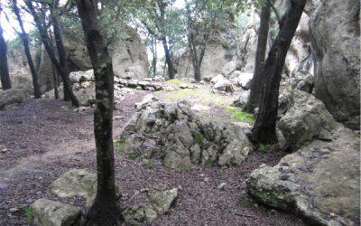 Jornada formativa sobre els banys de bosc Sèlvans a les Balears. Apunteu-vos-hi!