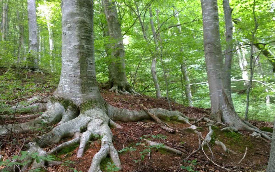 Paso adelante en la custodia de los Bosques Singulares de Cataluña
