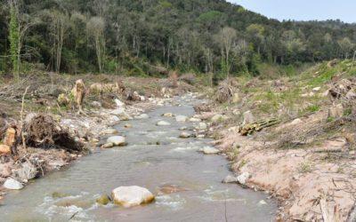 Diverses organitzacions ecologistes denuncien la destrucció del bosc de ribera a la riera d'Arbúcies