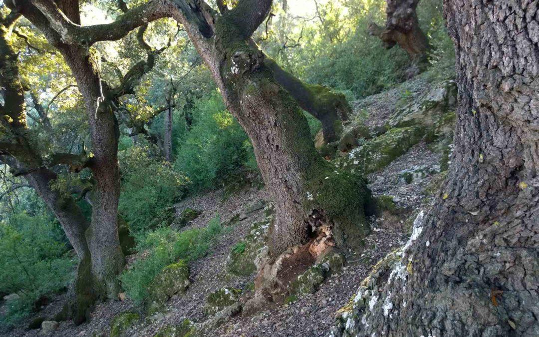 Iniciem una sèrie sobre els beneficis i serveis ecosistèmics dels boscos més madurs.