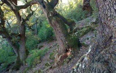 Iniciamos una serie sobre los beneficios y los servicios ecosistemicos de los bosques mas maduros.