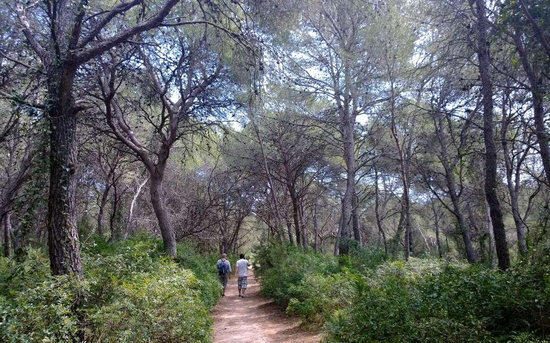 Els serveis ecosistèmics dels boscos més madurs. Visió general, i vincle amb els ODS.