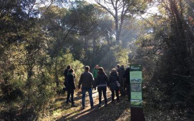 Els boscos madurs i l'ODS 3 (Salut i Benestar) – (2a part)