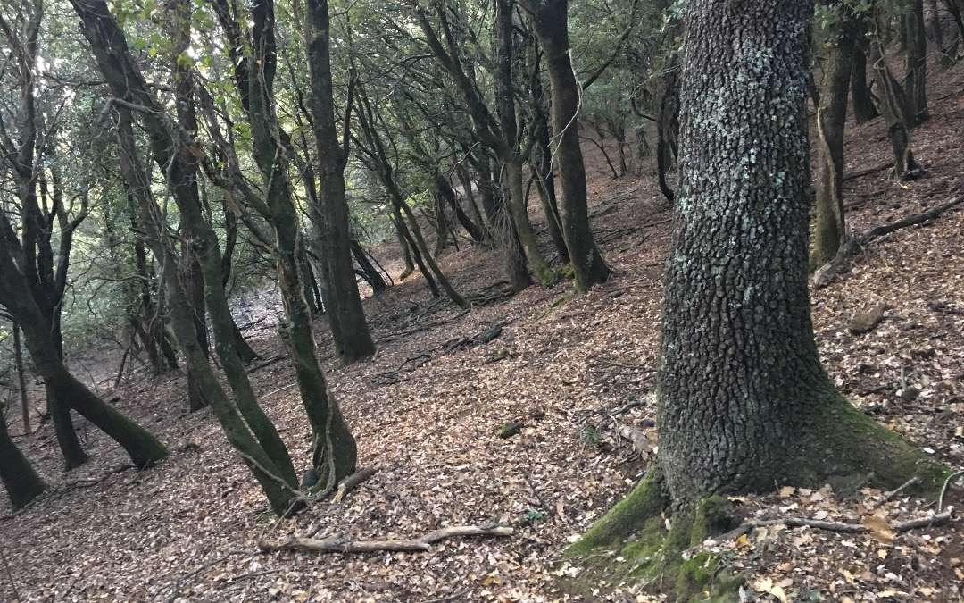 Preservades 5,36 ha d'un alzinar centenari a la Garrotxa, gràcies a COSTA BRAVA MEDITERRANEAN FOODS