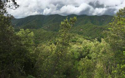 Col·laboració entre Ernesto Ventós, SA. i Sèlvans per a la preservació i valorització de boscos madurs mediterranis a Catalunya