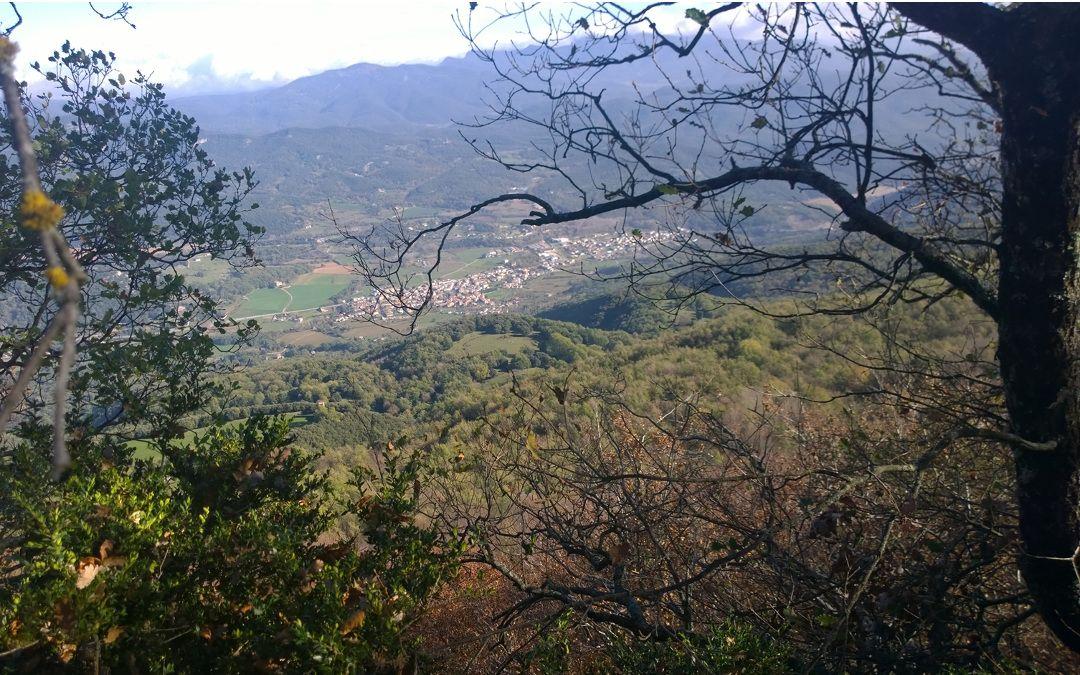 Boscos Selvans