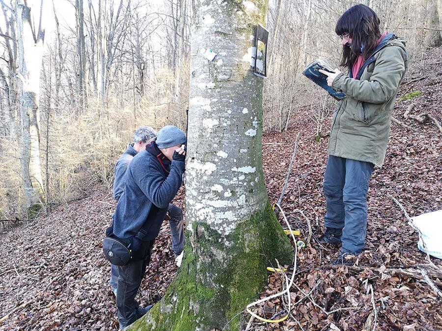Col·laborem amb la ICHN en la realització de parcel·les de seguiment de líquens i briòfits en un rodal de bosc madur custodiat per Sèlvans.
