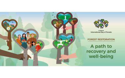 """Celebrem el """"Dia Internacional dels Boscos 2021"""" amb una crida a preservar el nostre """"nucli antic dels boscos"""""""