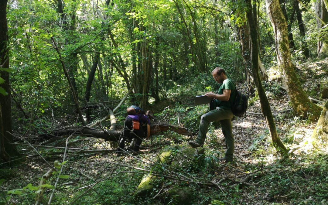 """Avancem la recerca sobre el servei ecosistèmic """"Biodiversitat"""" en boscos madurs"""