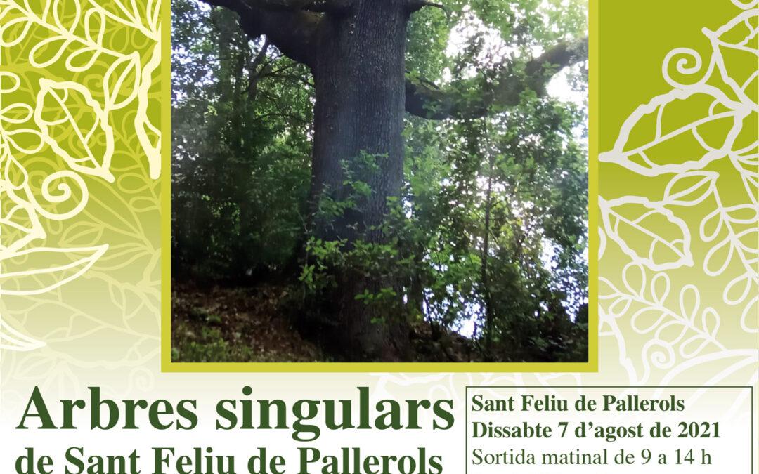 Matinada forestal d'arbres singulars a Sant Feliu de Pallerols